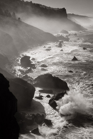 Redwood Coast, California, 2003 image
