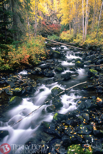 Moul Creek, Wells Gray Provincial Park, BC