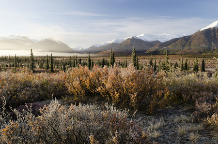 Frost and Fog in Broad Pass