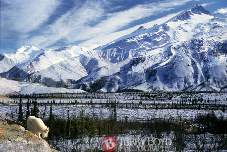 Canadian Mt. Goat meets the Reindeer Hills AK, (accidental 2x exposure 35mm)